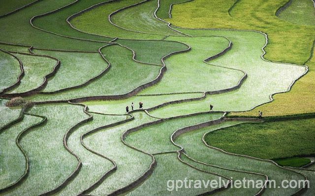 Baie de Ha Long & Mu Cang Chai, Pays des Plus Belles Rizières en Terrasse du Vietnam – 5 jours:  VAUT04